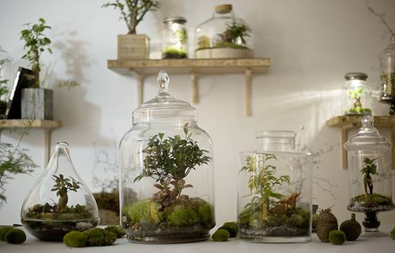 le terrarium du vert en bo te pour les jardiniers urbains. Black Bedroom Furniture Sets. Home Design Ideas