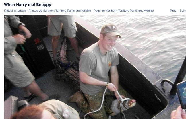 648x415_prince-harry-crocodile-australie