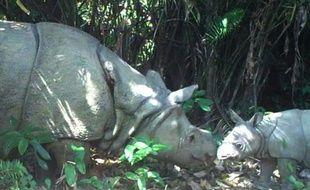 Photo fournie par le parc national de Ujung Kulon, le 9 septembre 2015, montre une femelle rhinocéros et son petit, sur l'île de Java, en Indonésie