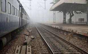 Le conducteur du train avait freiné soudainement pour éviter l'animal sacré.