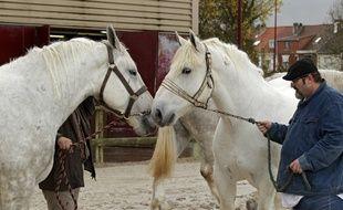 Cette course d'attelage met en valeur les boulonnais, une race de chevaux de trait du Pas-de-Calais (illustration).