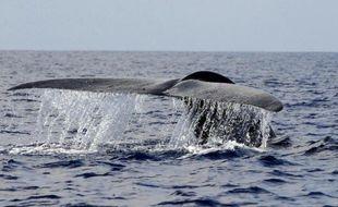 Une baleine bleue