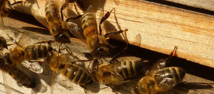 Des abeilles sur leur ruche. Illustration.