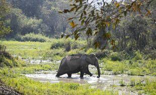 En Inde, un éléphant tue les villageois qu'il croise sur son passage.