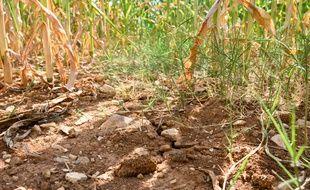 En Charente, les sols et la végétation ont souffert de la sécheresse.