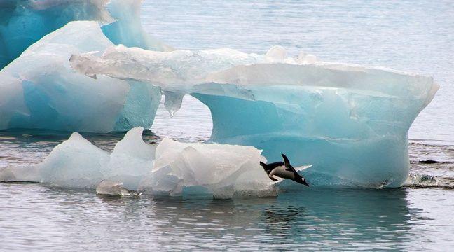 Coincés par un iceberg, les manchots du cap Denison doivent parcourir 120 kms pour se nourrir. – VANDERLEI ALMEIDA / AFP