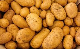 Des pommes de terre (illustration)