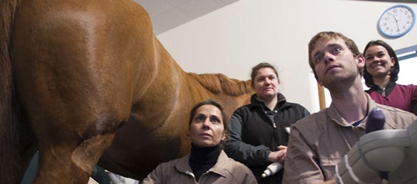 Au centre d'imagerie et de recherche sur les affections locomotrices équines (Cirale) à Goustranville (Calvados).
