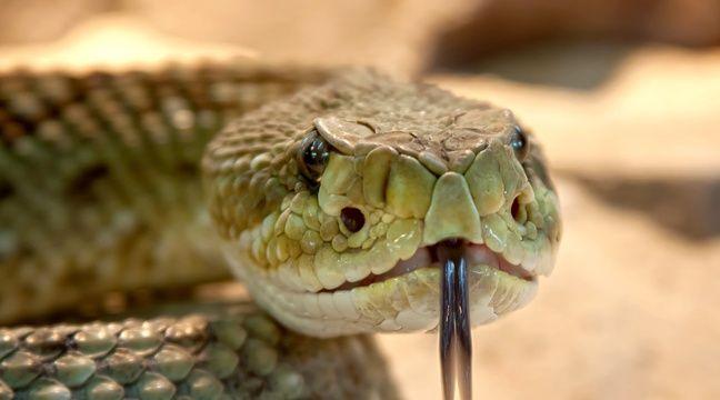 En Floride, un parc en partie fermé pour laisser des serpents s'accoupler