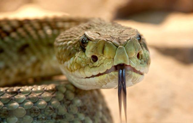 Floride: Une partie d'un parc fermée pour laisser des serpents s'accoupler tranquillement