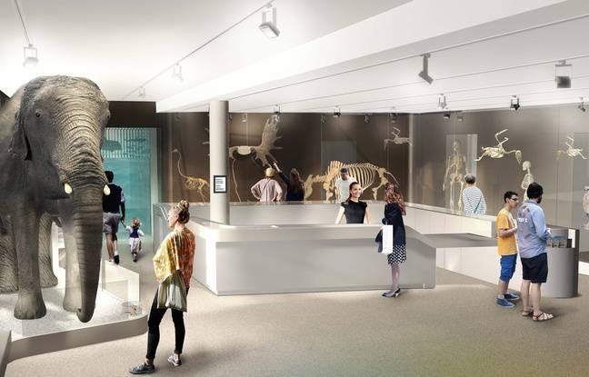 Image de synthèse du hall d'entrée du futur muséum de Bordeaux