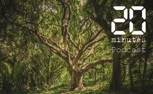 Illustration d'un arbre dans une forêt