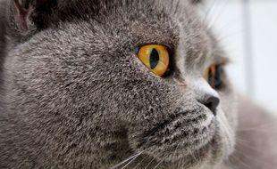 Les internautes rivalisent de qualificatifs pour décrire l'odeur de la tête des chats.