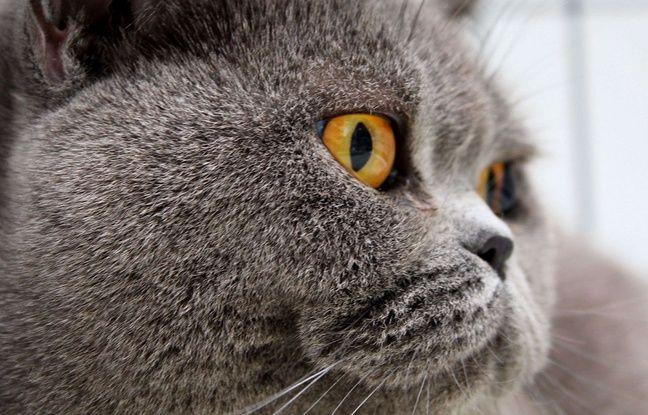 japon l odeur des chats enfin mise en bouteille. Black Bedroom Furniture Sets. Home Design Ideas
