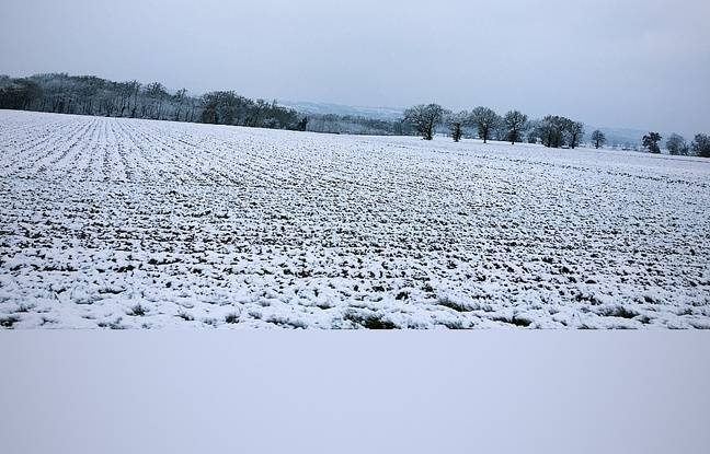 La neige dans le Lauragais, jeudi 8 février. Haute-Garonne.