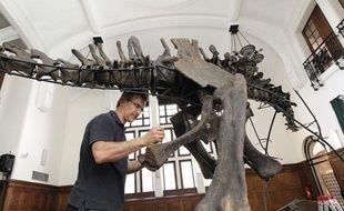 Un squelette de diplodocus installé à l'Institut de Paléontologie Humaine le 27 juin 2011 à Paris. Il sera vendu lors d'une vente aux enchères chez Sotheby's le 13 octobre.