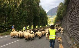 Marc Peyrusqué et son troupeau de brebis en transhumance près d'Etsaut, en vallée d'Aspe.