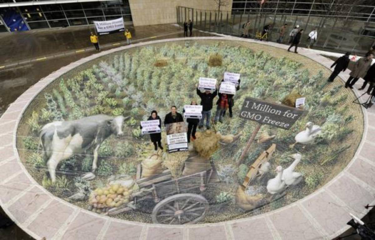 La France, l'Allemagne et le Royaume-Uni ont définitivement enterré lundi une proposition soumise par la présidence danoise des Vingt-Sept sur la question sensible de l'autorisation de culture des OGM sur le continent, a annoncé la ministre danoise de l'Environnement. – John Thys afp.com