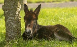 En septembre 2017, le chasseur d'origine suisse avait abattu quatre ânes dans les Bauges.