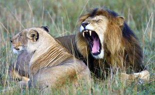 La disparition progressive des grands carnivores comme les lions, les loups ou les pumas menace les écosystèmes de la planète, prévient une équipe internationale de scientifiques à l'origine d'un appel lancé jeudi pour protéger ces prédateurs.