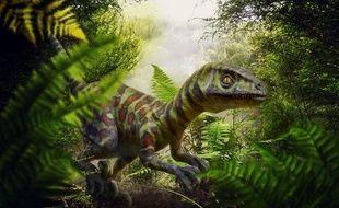 Le squelette découvert serait celui d'une nouvelle espèce de raptors (illustration).