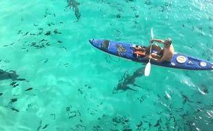 Il fait du canoë au milieu des requins - Le Rewind (video)