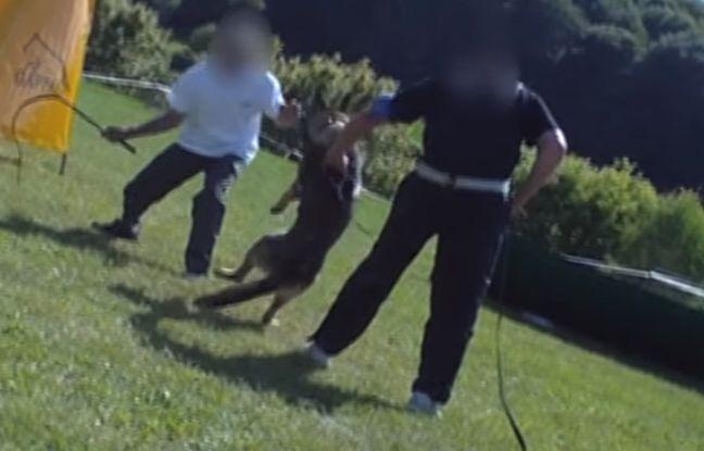 VIDEO. Maltraitance animale: Les images choc des centres de dressage pour chiens