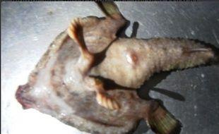 Le «poisson mutant» possède deux pieds et une sorte de nez humain.