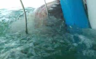 Une jeune femme a filmé un requin blanc en plongeant dans une cage.
