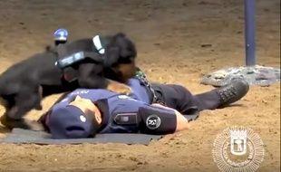 Sur la vidéo, on voit le chien sauter sur la poitrine du policier.
