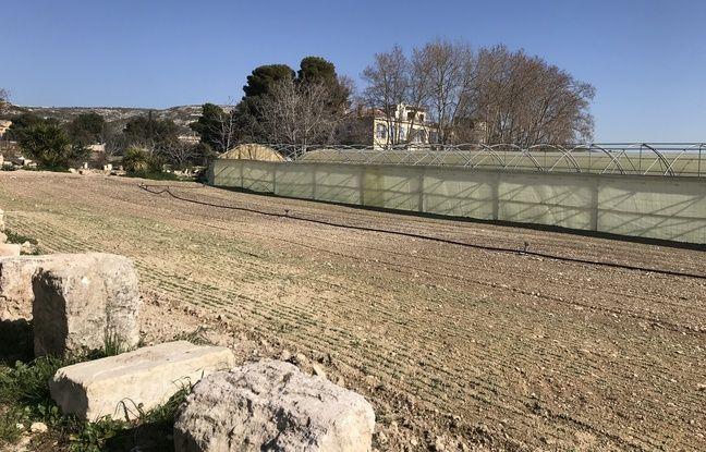 L'exploitation agricole de la famille Garnerone, les derniers paysans de Marseille.