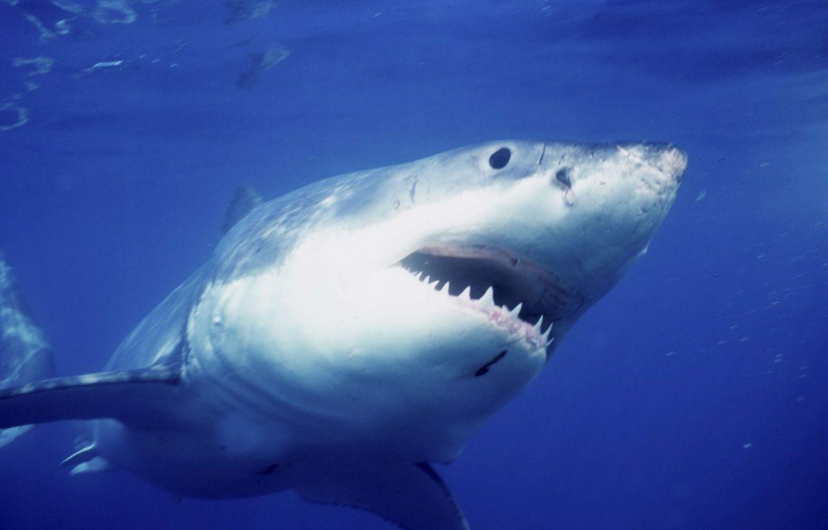 Un bassin plein de requin trouvé dans le sous sol d'une maison à New York – SUPERSTOCK/SUPERSTOCK/SIPA