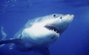 Un bassin plein de requin trouvé dans le sous sol d'une maison à New York