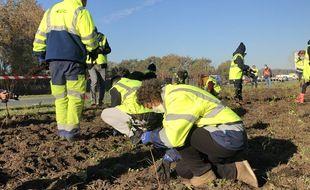 Des agents de Bordeaux Métropole ont effectué des plantations sur le secteur de Mérignac, ce lundi.