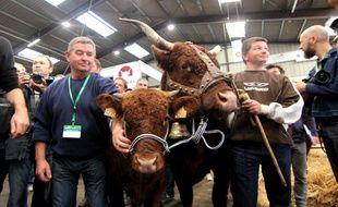 Des éleveurs ont présenté leurs vaches Salers au ministre de l'Agriculture à Rennes.