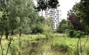 Les zones humides des prairies Saint-Martin, à Rennes, accueillent trop d'eau et seront pompées.