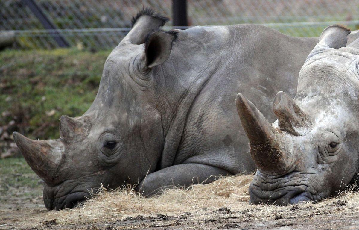 Yvelines au zoo de thoiry les naissances ne font pas for Zoo en yvelines