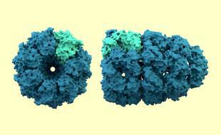 Structure cristallographique d'une protéine chaperonne (PDB 1AON10)