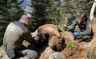 La dépouille de l'ours Cachou entouré d'agents spécialisés du Conseil général du Val d'Aran, en Espagne, lors de sa découverte.