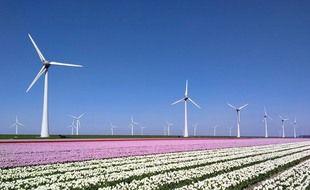 Les pales des éoliennes représentent un réel danger pour nombre d'espèces volantes