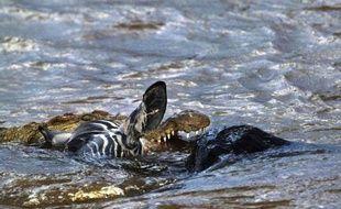 Un énorme reptile préhistorique long de près de 10 mètres, dont un crâne fossilisé a été découvert au Maroc, est l'ancêtre des crocodiles vivant aujourd'hui en Afrique, selon des travaux de chercheurs américains publiés mardi.