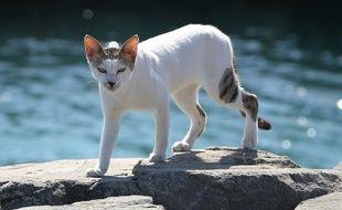 Marseille compte plusieurs milliers de chats errants. (Photo d'illustration).