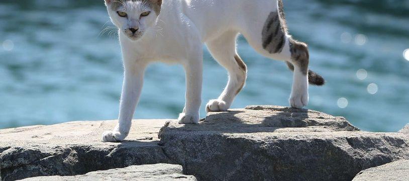 Marseille compte plusieurs milliers de chats errants. (Photo d'illustration)