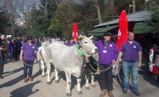 Vaches, veaux et brebis ont défilé au parc des Buttes Chaumont.
