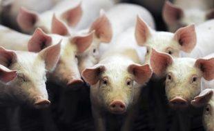 La décision d'une puissante fédération d'éleveurs de renoncer au prix minimum de 1,40 euro le kilo pour leurs porcs pourtant fixé avec le gouvernement suscite la colère du ministre de l'Agriculture Stéphane Le Foll