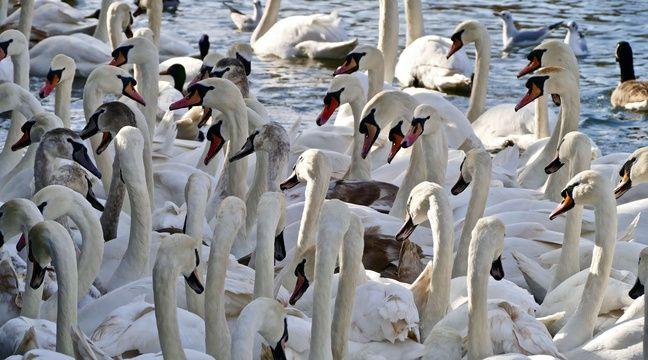 « Renforcement de la vigilance » en France autour de la grippe aviaire