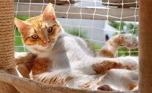 Si les chats résistent mieux à la chaleur que les chiens, ils n'en sont pas pour autant invulnérables