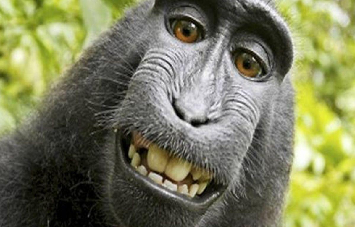 L'un des selfies réalisés par le macaque à crête qui avait chipé l'appareil de David Slater. – Photo David Slater