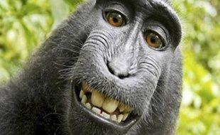 L'un des selfies réalisés par le macaque à crête qui avait chipé l'appareil de David Slater.