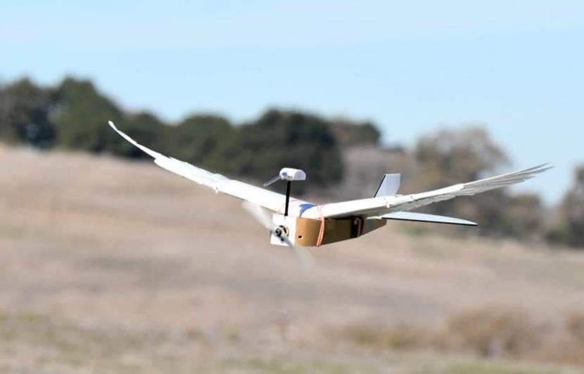 Découvrez PigeonBot, un drone qui s'envole comme un oiseau